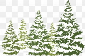 Pine Winter Material - Snow PNG