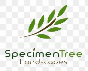 Leaf - Leaf Logo Brand Font Green PNG