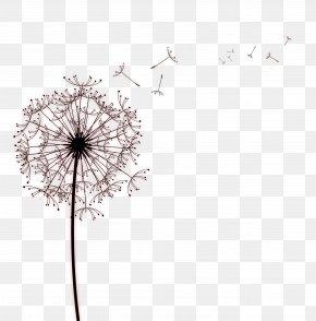 Black Simple Dandelion Decoration Pattern - Paper Common Dandelion Drawing Photography PNG
