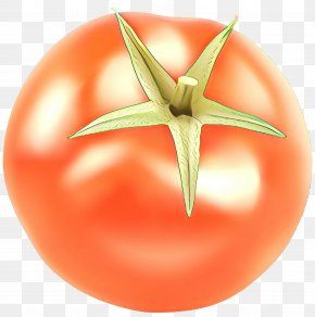 Vegetable Nightshade Family - Tomato Cartoon PNG