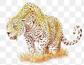Snow Leopard Cheetah Tiger Ocelot PNG