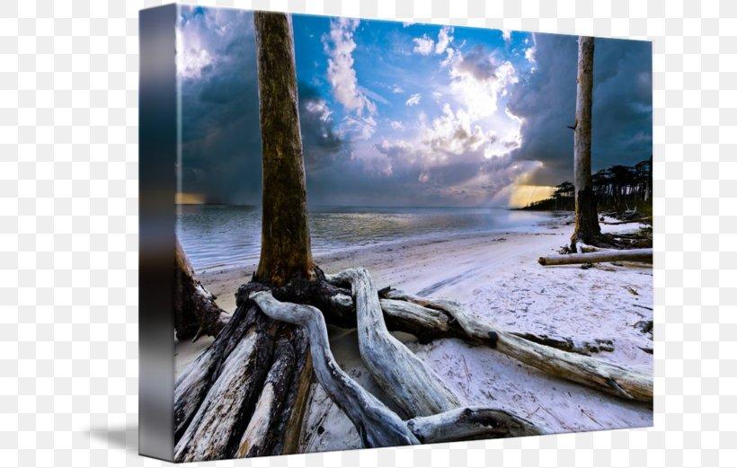 driftwood tree painting desktop wallpaper computer png favpng