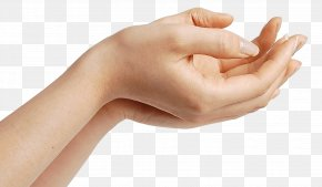 Hands Hand Image - Hand Finger Human Body PNG