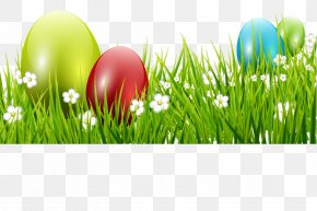 Easter - Easter Egg Holiday Greeting & Note Cards Ansichtkaart PNG
