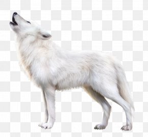 Arctic Fox - Arctic Fox Alaskan Tundra Wolf Arctic Wolf Wolfdog PNG