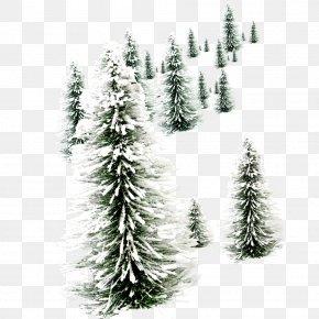 Christmas Tree - Santa Claus Christmas New Year's Day Wish PNG