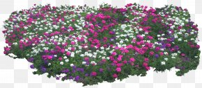 Lace Boarder - Shrub Plant Flower Tree Garden PNG