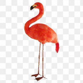 Ostrich - Bird Common Ostrich Greater Flamingo Beak PNG