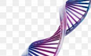 Purple Blue DNA Model - Desktop Wallpaper DNA Three-dimensional Space Science Molecular Biology PNG