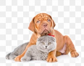 Cute Pet Cats And Dogs - Dogu2013cat Relationship Dogu2013cat Relationship Pet Heating Pad PNG