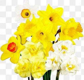 Moth Orchid Dendrobium - Cut Flowers Plant Stem Narcissus Herbaceous Plant Yellow PNG