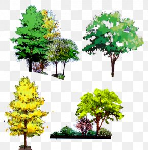 Decorative Trees - Tree Computer File PNG