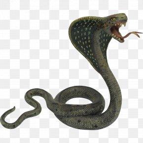 Cobra Snake Photos - Indian Cobra Snake King Cobra PNG
