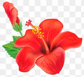 Red Exotic Flower Clipart Picture - Flower Clip Art PNG