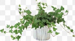 Pot Leaf - Vine Flower Houseplant PNG