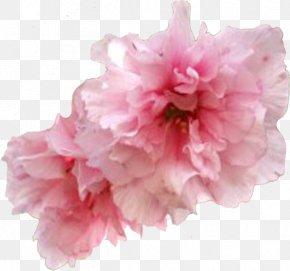 Flower - Flower Garden Roses Cherry Blossom Clip Art PNG