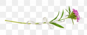 Bouquet Of Flowers - Petal Flora Brand Wallpaper PNG