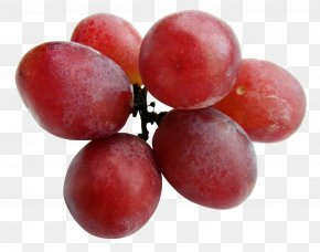 Grapes - Red Wine Malbec Grape PNG