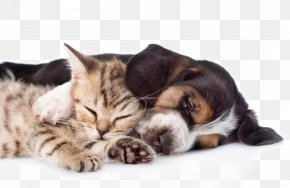 Cute Pet Cats And Dogs - Basset Hound Persian Cat Kitten Puppy Ferret PNG
