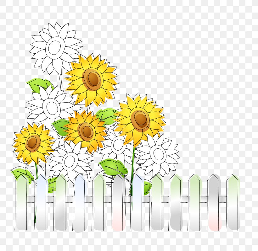 Common Sunflower Download, PNG, 800x800px, Common Sunflower, Chamaemelum Nobile, Chrysanths, Cut Flowers, Dahlia Download Free