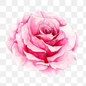 Painted Pink Rose - Rosa Chinensis Watercolor Painting Pink PNG