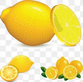 Lemon Image - Juice Lemon Euclidean Vector PNG
