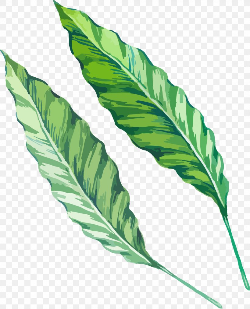 Leaf Watercolor Painting Drawing Green, PNG, 1138x1409px, Leaf, Cartoon, Color, Drawing, Green Download Free