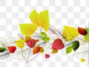 Autumn Leaves PPT Templates - Autumn Leaf Color Euclidean Vector PNG