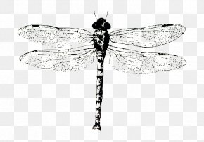 Dragonfly Specimens - Biological Specimen Monochrome Black And White PNG