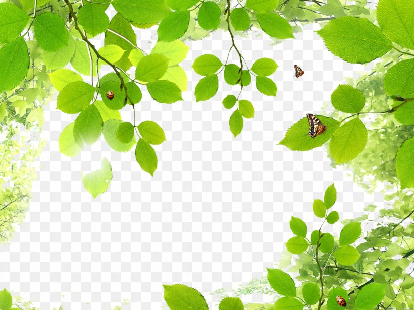 Butterfly Green Leaf, PNG, 1024x768px, Butterfly, Branch, Color, Grass, Green Download Free