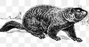 Groundhog Day Clip Art Punxsutawney - Groundhog Vector Graphics Line Art Drawing PNG