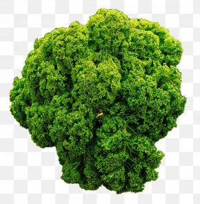 Kale - The Virgin Diet Food Kale Vegetable Health PNG
