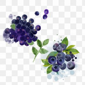 Hand-painted Blueberry - Bilberry Blueberry Pie Fruit PNG