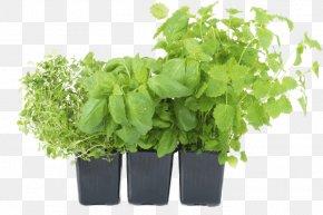 Vegetable - Vegetable Flowerpot Herb Garden PNG