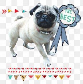Puppy - Pug Puppy Dog Breed Companion Dog Toy Dog PNG