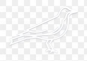 Water Bird Animation - Bird Icon Corvus Icon Crow Icon PNG