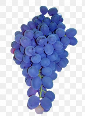 Grape - Common Grape Vine Sultana Isabella Grape Seed Extract PNG