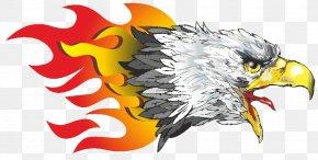 Vector Eagle - Eagle PNG