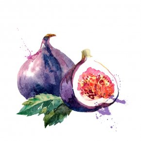 Watercolor Painting - Watercolor Painting Common Fig Drawing Fruit PNG
