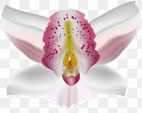Orchid Deco Flower Clip Art - Moth Orchids Petal PNG