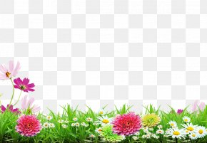 Spring Background Poster - Poster PNG