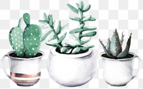 Suculent - Cactaceae Succulent Plant Watercolor Painting Drawing Haworthia PNG