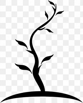 Tree - Tree Branch Trunk PNG