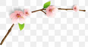 Peach Blossom - Cherry Blossom Watercolor Painting Image RGB Color Model PNG