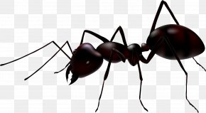 Ant - Ant Royalty-free Stock Photography Illustration PNG