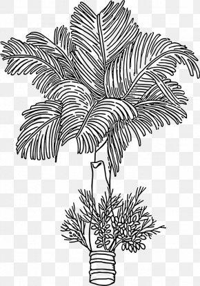 Betel Leaf - Areca Palm Areca Nut Betel Arecaceae Paan PNG