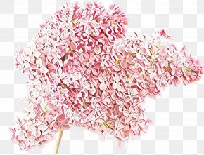 Blossom Flower - Pink Cut Flowers Plant Flower Blossom PNG