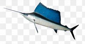 Ocean Fish HD - Indo-Pacific Sailfish Fishing Swordfish Shoaling And Schooling PNG