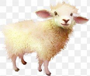 Goat Free Download - Sheep Download PNG