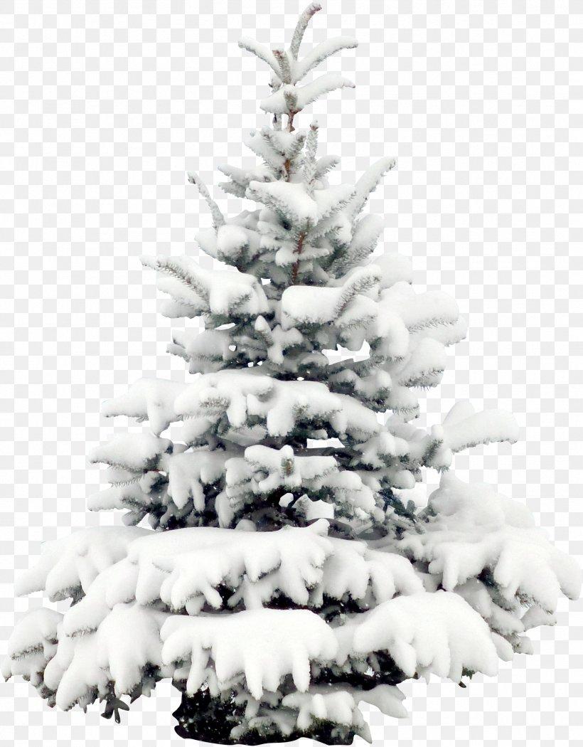 Snow Tree Pine Christmas Wallpaper Png 1802x2308px Pine Black